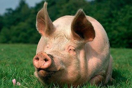 Ultimul guiţ: să-ţi tai porcu-n statu' paralel
