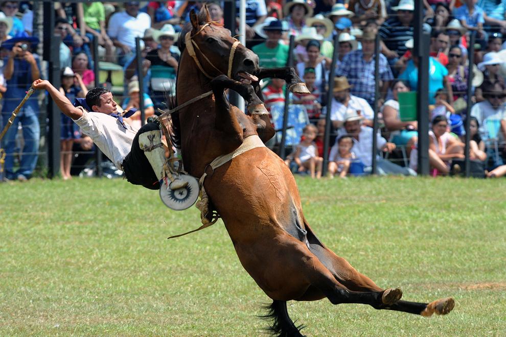 Un gaucho Paraguaian calareşte un cal în timpul festivalului tradiţional desfaşurat anual în Santiago, 270 km sud de Asuncion, duminica, 20 ianuarie 2013.