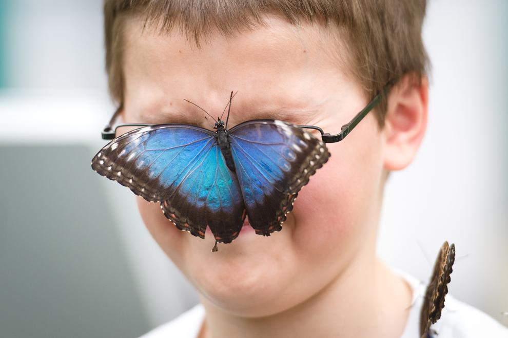 Un băiat pozează cu un fluture Morpho peleides pe faţă, în timpul unei şedinţe foto de promovare a expoziţiei 'Sensational Butterflies', găzduită de Muzeul de Istorie Naturală din Londa, luni, 25 martie 2013.