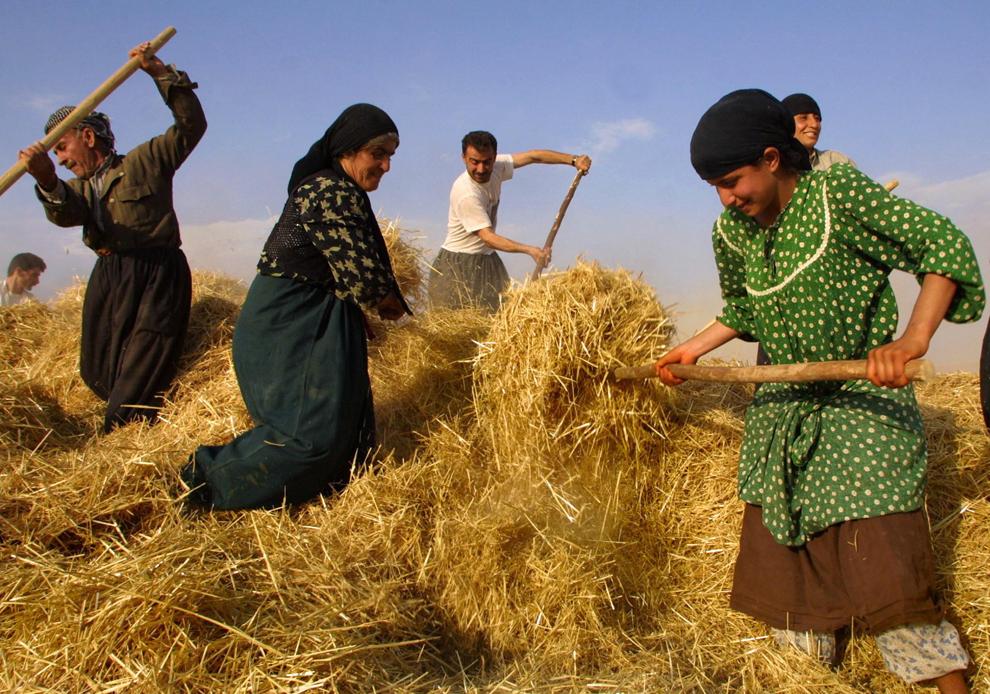 O familie kurdă din Irak strânge fânul la ferma lor din satul Kalak, aflat în zona controlată de Partidul Democrat din Kurdistan, la 420 de km de Bagdad, duminică, 27 octombrie 2002.