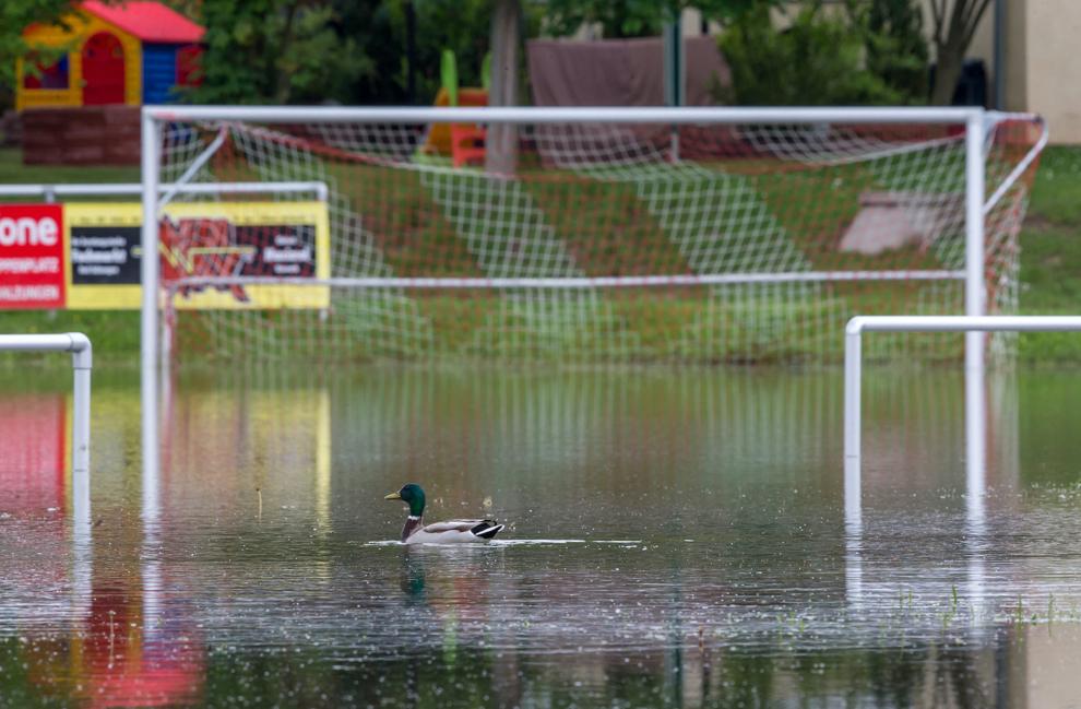O raţă înoată în apa ce acoperă un teren de fotbal, în Bad Salzungen, estul Germaniei, joi, 30 mai, 2013.