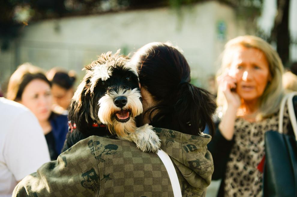"""Un câine este ţinut în braţe de stăpâna sa, în timpul """"marşului fostului maidanez"""", manifestaţie prin care iubitori de animale şi membrii unor asociaţii de protecţie a animalelor cer anularea legii care permite eutanasierea câinilor fără stăpân, în Bucureşti, sâmbătă, 14 septembrie 2013."""