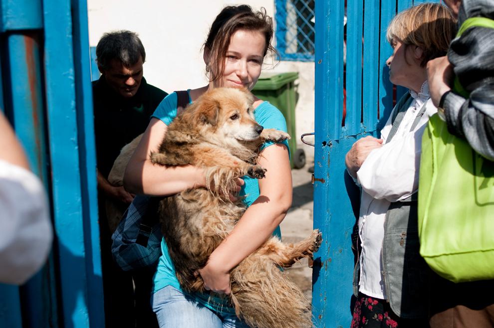 O tânără iese cu câinele pe care l-a adoptat din adăpostul Pallady, în Bucureşti, vineri, 13 septembrie 2013.