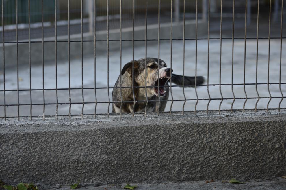 Un câine maidanez poate fi văzut în zona Pantelimon-Vergului, în Bucureşti, joi, 5 septembrie 2013.
