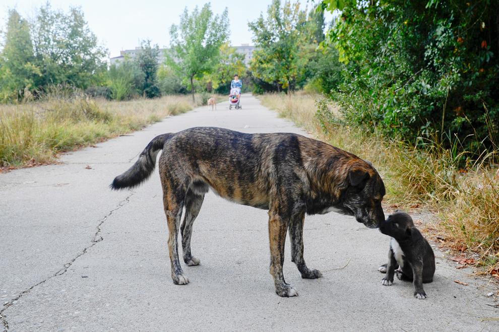 Un câine maidanez interacţionează cu un căţeluş în parcul Alexandru Ioan Cuza din Bucureşti, vineri, 6 septembrie 2013.