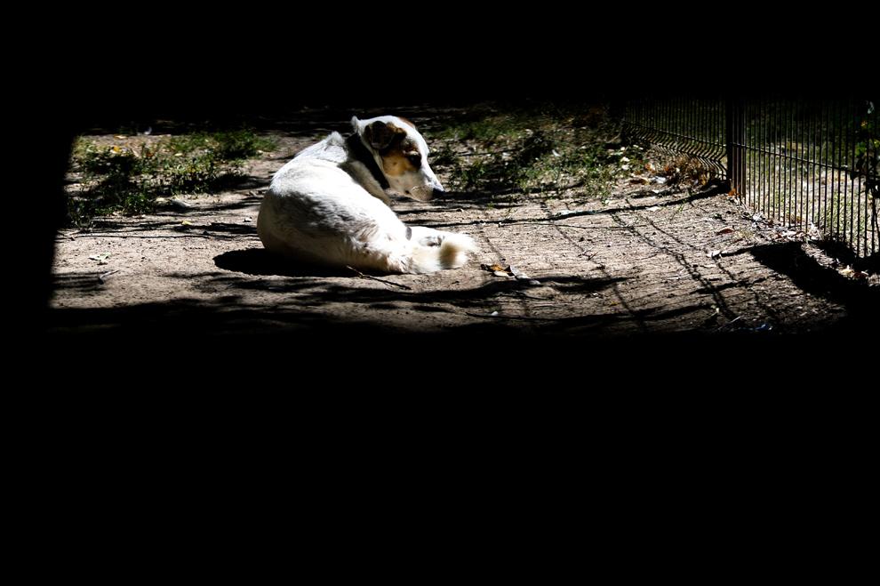 Un câine maidanez stă pe o alee dintr-un parc din sectorul 2 din Bucureşti, vineri, 6 septembrie 2013.