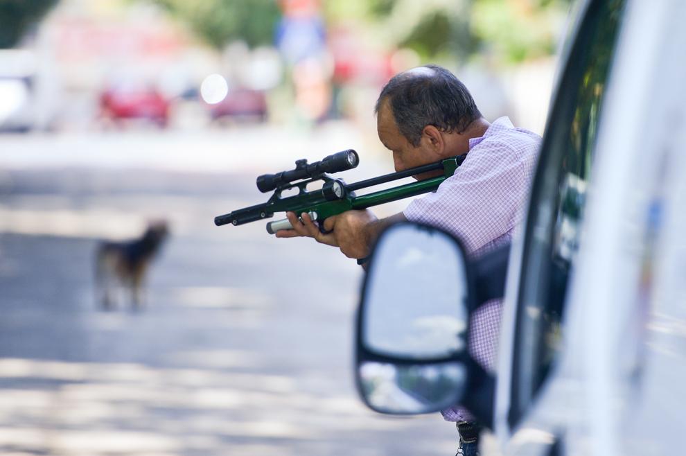Un hingher încearcă să prindă un câine, în Bucureşti, marţi, 10 septembrie 2013.