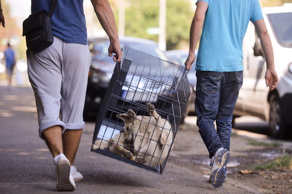 Un câine, aflat într-o cuşcă, este luat de hingheri, în Bucureşti, marţi, 10 septembrie 2013.