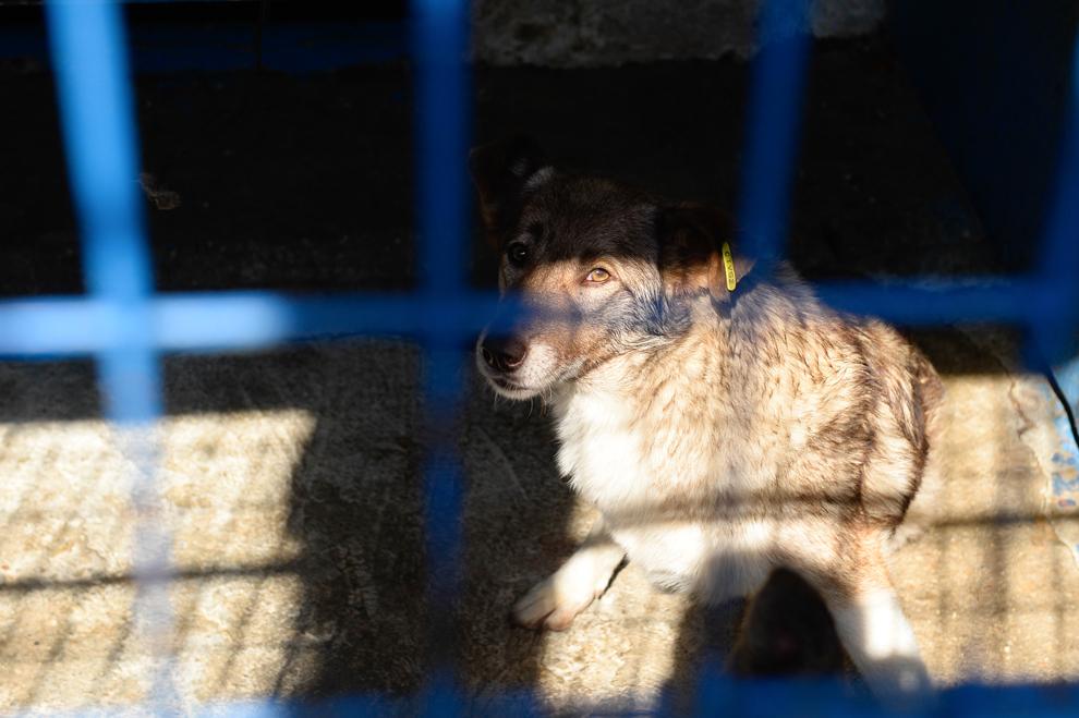 Un câine stă într-o cuşcă din adăpostul Pallady, în Bucureşti, miercuri, 9 septembrie 2013.