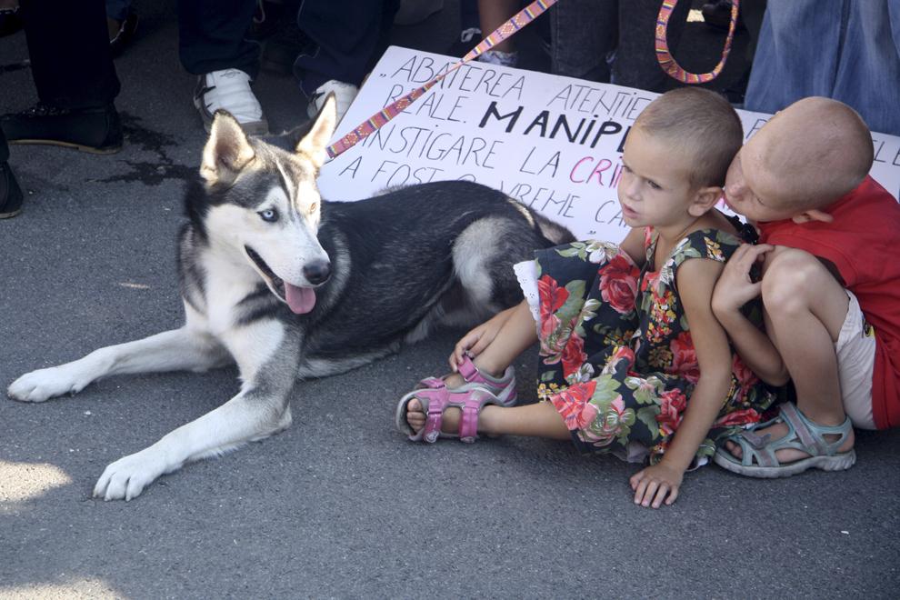 """Doi copii stau lângă un câine ţinut în lesa, în timpul mitingului organizat de Asociaţia """"Cuţu, cuţu"""" pentru sprijinirea proiectului de lege privind sterilizarea, (proiectul Marinescu 2), aflat la Comisii, şi exprimarea protestului faţă de eutanasie, în faţa Parlamentului, în parcul Izvor din Bucureşti, marţi, 10 septembrie 2013."""