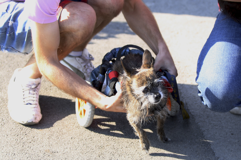 """Un bărbat cu un câine aflat într-un dispozitiv cu rotile participă la mitingul organizat de Asociaţia """"Cuţu, cuţu"""" pentru sprijinirea proiectului de lege privind sterilizarea, (proiectul Marinescu 2), aflat la Comisii, şi exprimarea protestului faţă de eutanasie, în faţa Parlamentului, în parcul Izvor din Bucureşti, marţi, 10 septembrie 2013."""