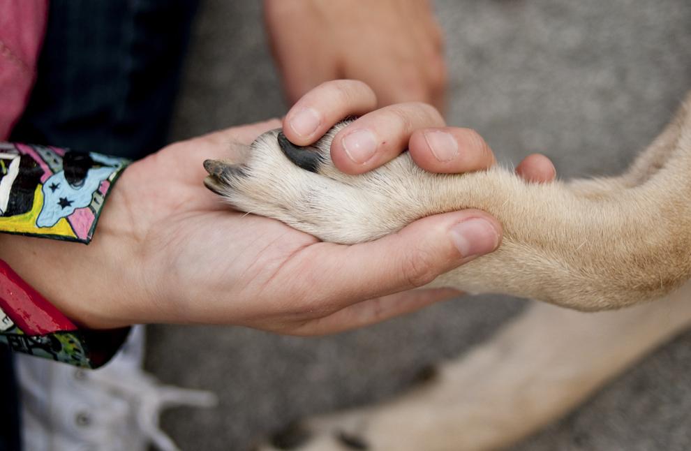 """Persoane însoţite de câinii lor participă la """"marşul fostului maidanez"""", manifestaţie prin care cer anularea legii care permite eutanasierea câinilor fără stăpân, în Bucureşti, sambata, 14 septembrie 2013."""