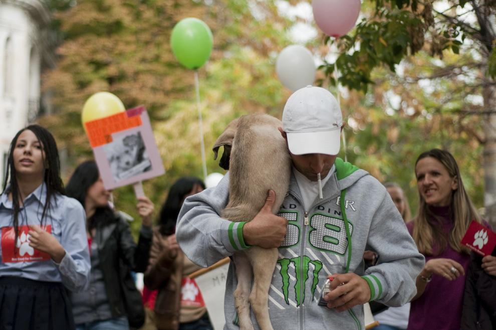 Persoane protestează faţă de eutanasierea câinilor fără stăpân, în Bucureşti, sâmbătă, 21 septembrie 2013.