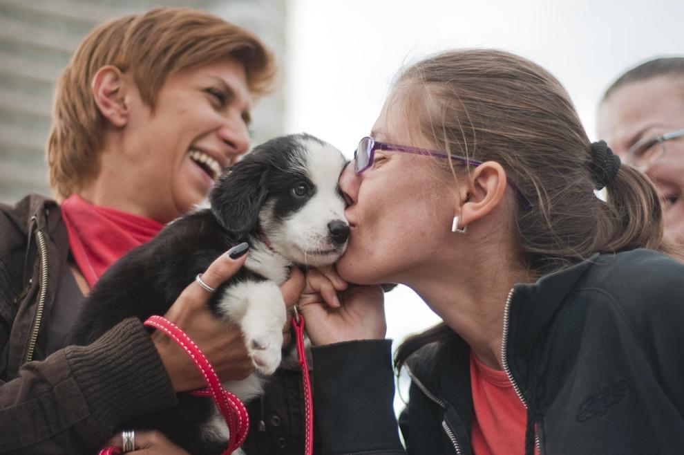 O tânără sărută un căţel, în timpul protestului faţă de eutanasierea câinilor fără stăpân, în Bucureşti, sâmbătă, 21 septembrie 2013.