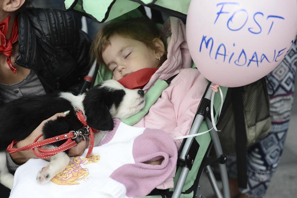 Un copil doarme, în timpul unui protest faţă de eutanasierea câinilor fără stăpân, în Bucureşti, sâmbătă, 21 septembrie 2013.