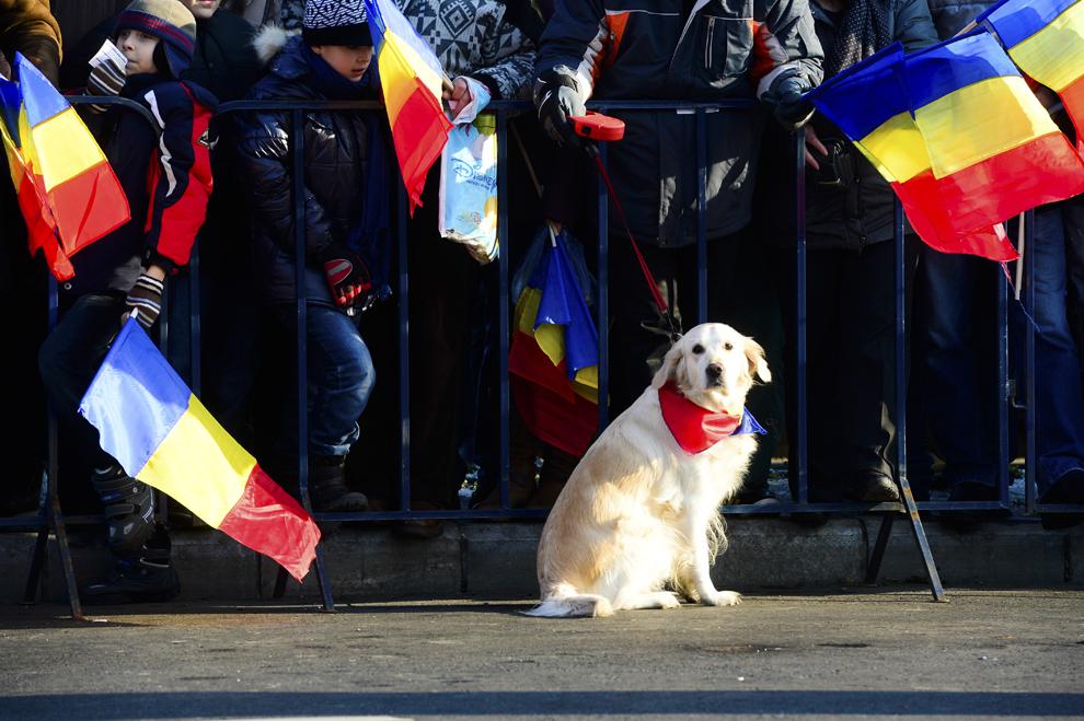 Un câine este ţinut în lesă de stăpânul său, în timpul paradei militare, organizate cu ocazia Zilei Naţionale a României, în Bucureşti, duminică, 1 decembrie 2013.