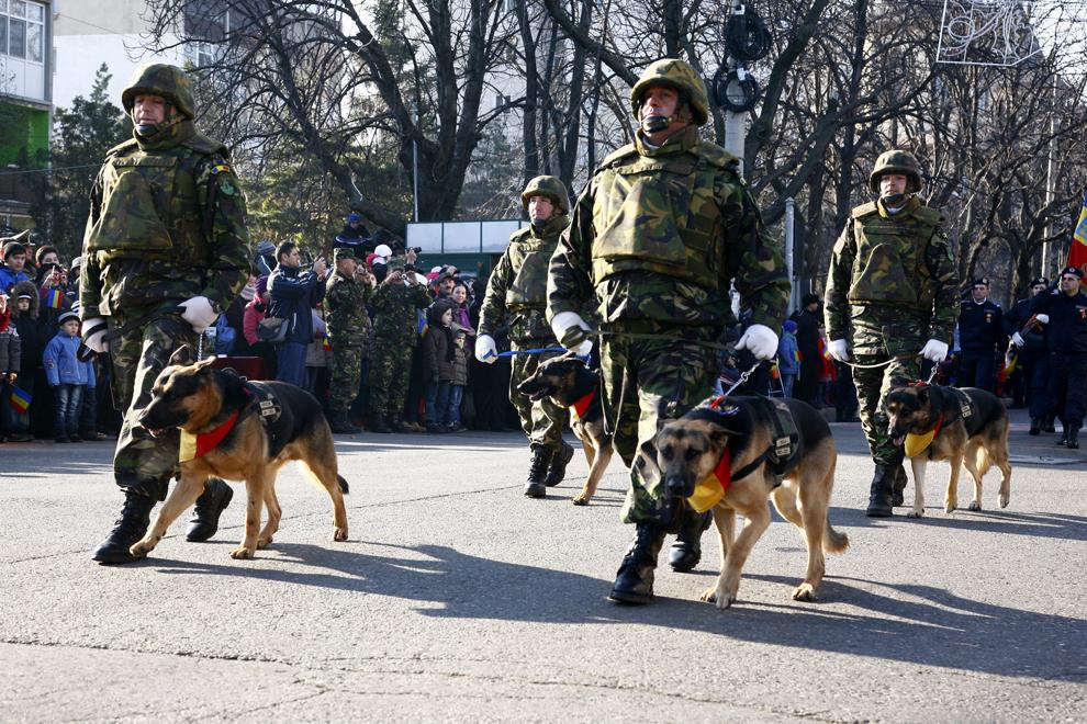 Militari însoţiţi de câini EODD participă la defilarea organizată cu ocazia Zilei Naţionale a României, la Buzău, duminică, 1 decembrie 2013.