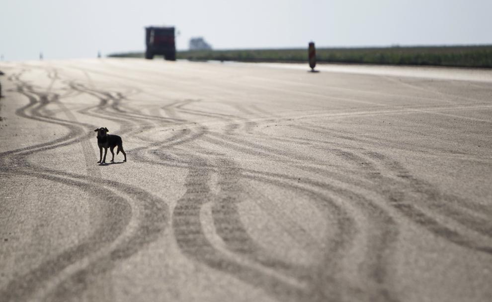 Un câine poate fi văzut pe şantierul tronsonului de autostradă Pecica - Nadlac, parte a autostrăzii Arad - Nadlac, joi, 17 iulie 2014.
