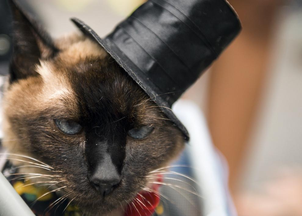"""O pisică ce poartă o pălărie reacţionează în timpul unei parade a carnavalului animalelor """"Blocao"""" în Copacabana, Rio de Janeiro, duminică, 16 februarie 2014."""