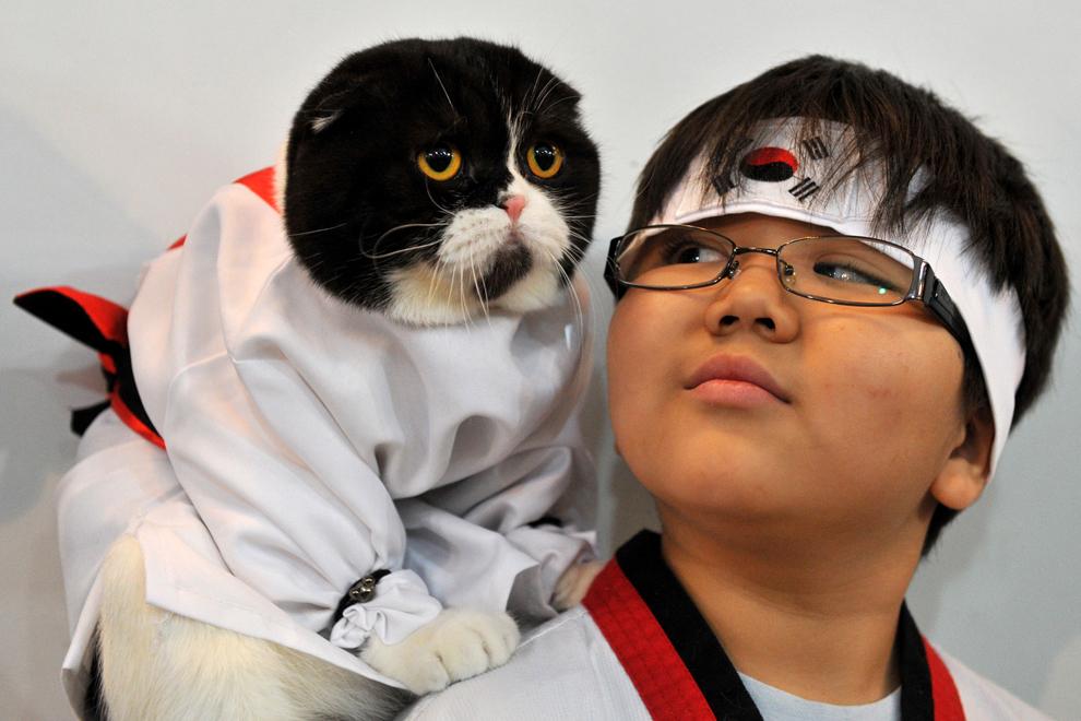 O pisică din rasa Scottish Fold, îmbrăcată într-un kimono, stă pe umărul unui baieţel în timpul unei expoziţii feline în Bişkek, Kârgâzstan, duminică, 20 octombrie 2013.