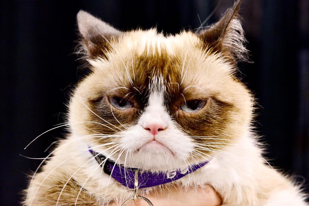 Grumpy Cat participă la VidCon - Ziua 2 la Anaheim Convention Center, vineri, 27 iunie 2014, în Anaheim, California.