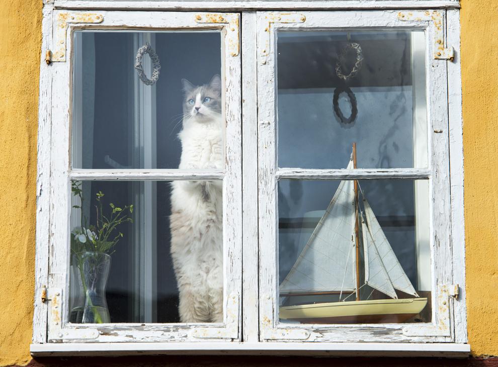 O imagine din data de 8 aprilie 2013 înfăţişează o pisică la o fereastră la Abaţia Sf. Ioan din Stralsund, Germania.