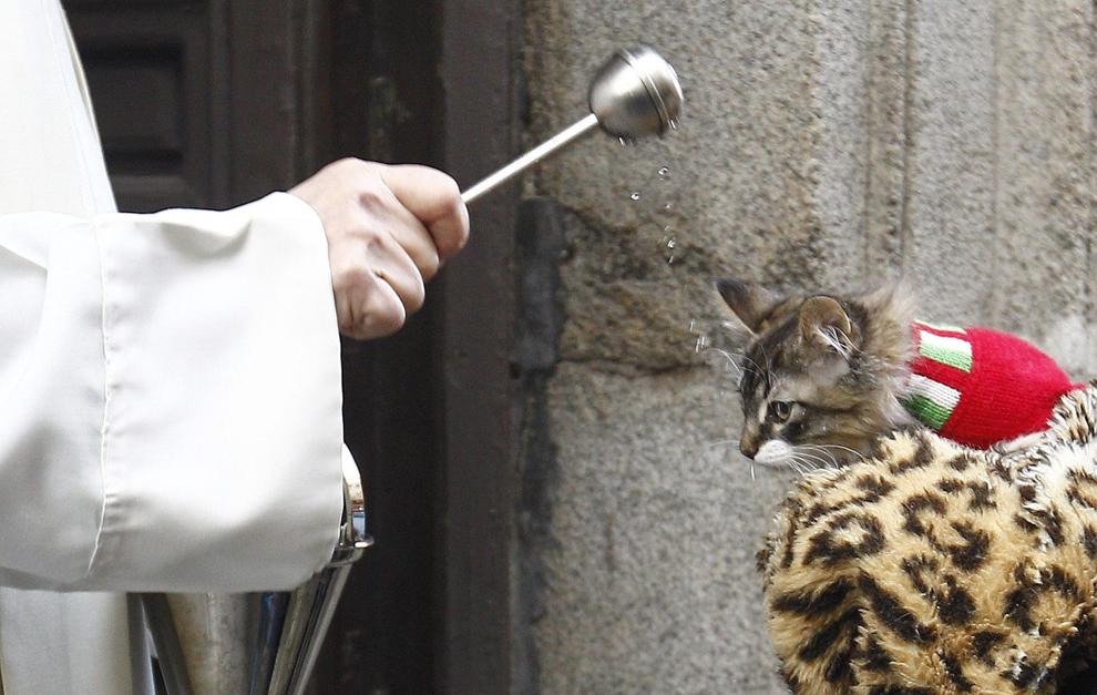 O pisică este binecuvântată de un preot de la Biserica Sf. Anton din Madrid, Spania, vineri, 17 ianuarie 2014. În fiecare an, animalele sunt binecuvântate în timpul celebrării zilei Sfântului Anton.