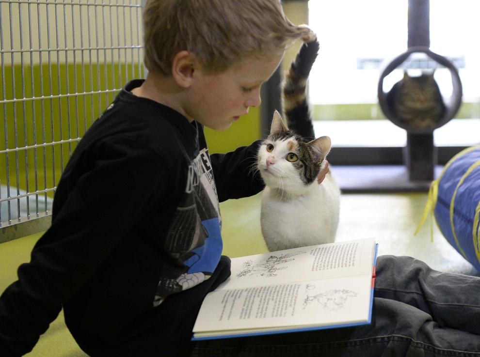 Un copil citeşte pentru o pisică la adăpostul de animale din Amersfoort, Olanda, miercuri, 26 martie 2014. Atât pisicile din azil, cât şi copiii beneficiază de lectură: copiii în ceea ce priveşte îmbunătăţirea competenţelor de citire, pisicile delectându-se ascultând sunetul unei voci.