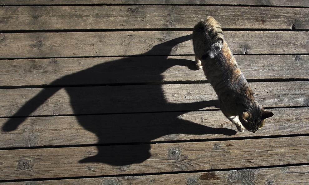 O pisică se plimbă pe terasa descoperită a unei cafenele, în apropiere de Seeg, Germania, marţi, 12 noiembrie 2013.