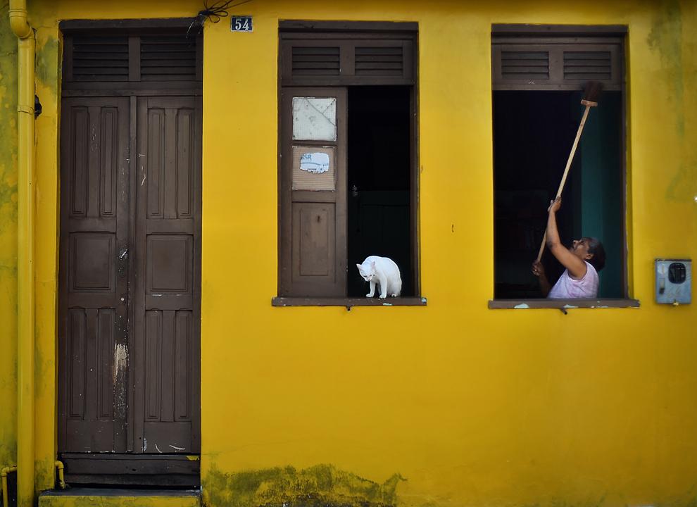 O pisică stă pe pervazul unei ferestre în timp ce o femeie îşi curăţă casa, în Manaus, Brazilia, sâmbătă, 14 iunie 2014.