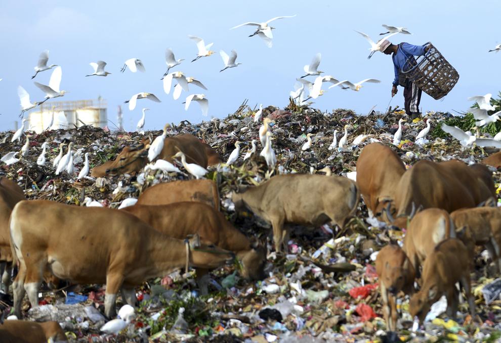 Un bărbat colectează produse dintr-o groapă de gunoi, în Denpasar, Bali, Indonezia, marţi, 16 septembrie 2014.