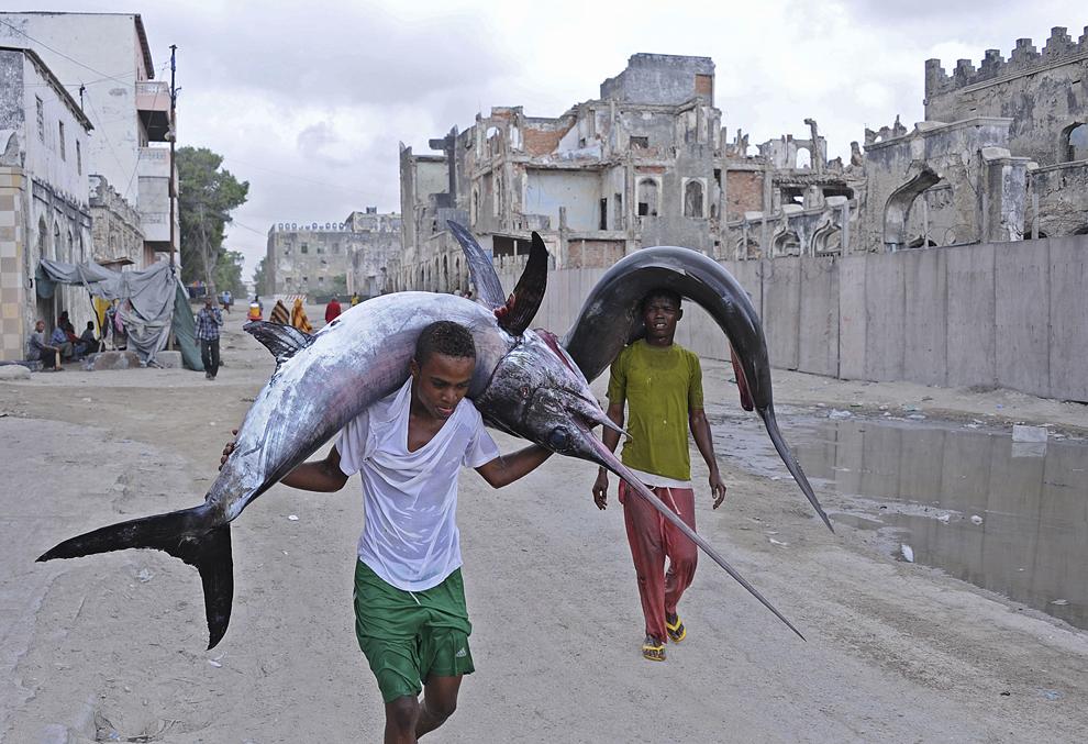 Muncitori cară un peşte-sabie şi un rechin către piaţă, în Hamarweyne, lângă portul Mogadishu, Somalia, marţi 18 noiembrie 2014.