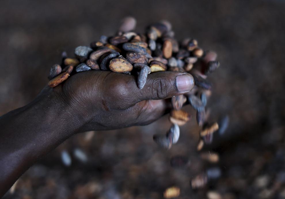 Un muncitor vântură boabe de cacao, în Kenama, Sierra Leone, duminică, 16 noiembrie 2014.