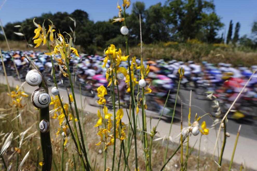 Melci pot fi văzuţi în timp ce plutonul de ciclişti se deplasează în cadrul celei de-a 6-a etape a Turului Franţei la ciclism, între Aix-en-Provence şi Montpellier, în sudul Franţei, joi, 4 iulie 2013.
