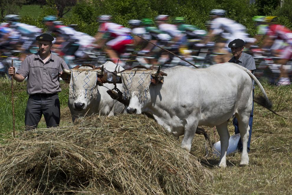 Plutonul de ciclişti trece pe lîngă doi fermieri aflaţi lângă vacile lor, în timpul celei de-a 9-a etape a Turului Franţei la ciclism, între Saint-Girons şi Bagneres-de-Bigorre, în sud-vestul Franţei, duminică, 7 iulie 2013.