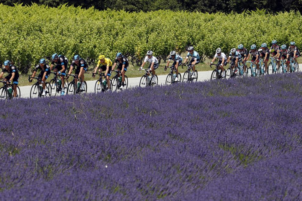 Liderul cursei şi purtător al tricoului galben, britanicul Christopher Froome(5S) pedalează în interiorul unui grup de ciclişti, în timp ce acestia trec pe lângă un câmp cu lavandă, în timpul celei de-a cincisprezecea etape a Turului Franţei, între Givors şi Mont Ventoux, sud-estul Franţei, duminică, 14 iulie 2013.