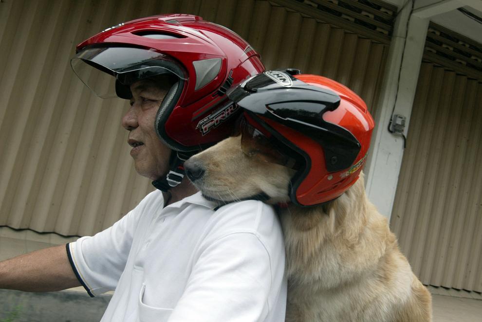 Indonezianul Handoko Njotokusumo şi câinele său Ace merg pe motocicletă în timpul unei plimbări de weekend, în Surabaya, estul insulei Java, Indonezia, sâmbătă, 2 martie 2013.