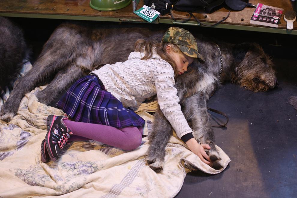 Caitlin, în vârstă de 9 ani, doarme pe ogarul său irlandez, în prima zi a concursului canin Crufts, în Birmingham, Anglia, joi, 7 martie 2013.