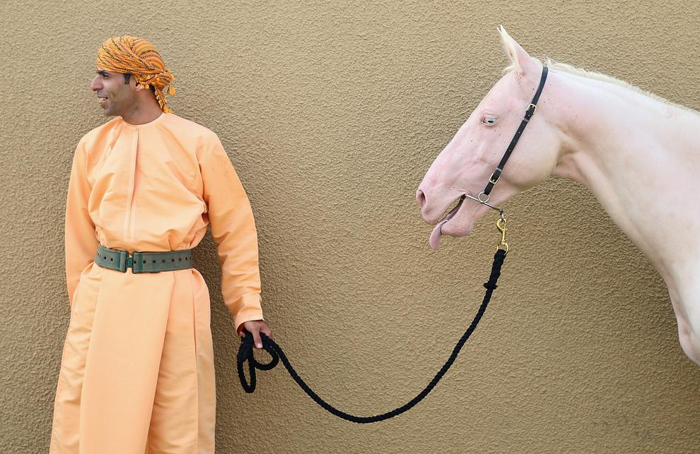 Un bărbat cu un cal roz participă la un eveniment de cavalerie organizat în onoarea vizitei prinţului de Wales şi a ducesei de Cornwall, în Muscat, Oman, luni, 18 martie 2013.