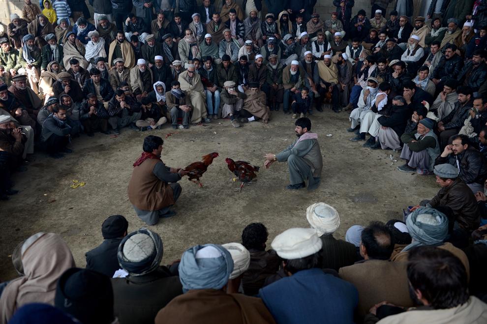 Bărbaţi afgani urmăresc o luptă de cocoşi în timpul unui campionat, în Kabul, vineri, 1 martie 2013.