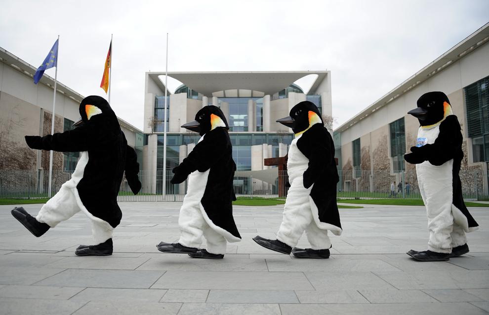 Activişti ce poartă costume ce înfăţişează pinguini, merg prin faţa Guvernului din Berlin, marţi, 23 aprilie 2013.