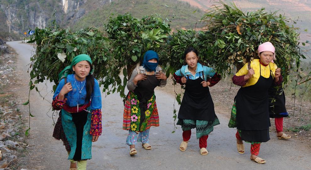 O fotografie realizată joi, 8 martie 2012, înfăţişează mai multe femei aparţinând tribului H'Mong, aflat în zona muntoasă din nordul Vietnamului, mergând spre casă cu coşuri pline de ierburi sălbatice in spate, în provincia nordică Ha Giang.