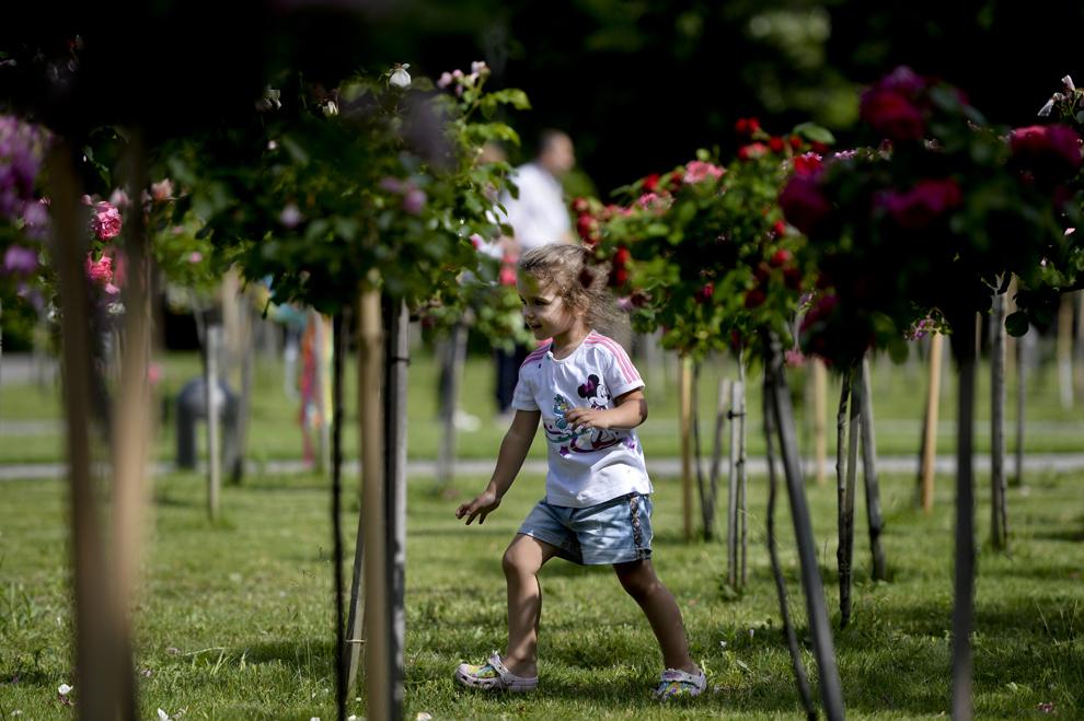O fetiţă se plimbă prin rosarium-ul din parcul IOR din Bucureşti, duminică, 26 mai 2013.