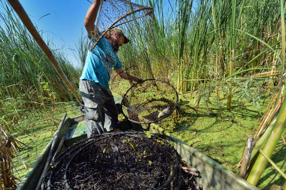 Ivan, un pescar local, verifică o plasă de pescuit în satul Mila 23, în inima Deltei Dunării, luni, 22 iulie 2013.