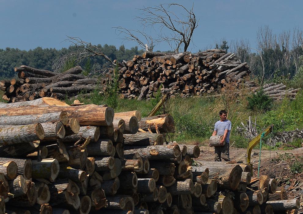 Un bărbat cară o bucată de buştean în apropierea Deltei Dunării, luni, 22 iulie 2013.
