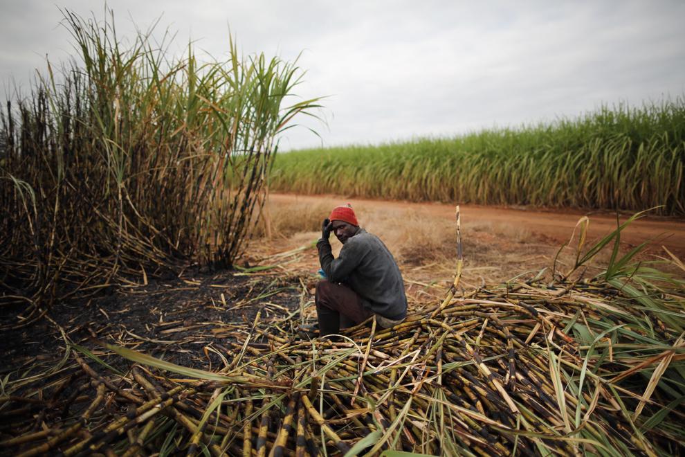 Un muncitor face o pauză într-un câmp din apropierea Parcului Naţional Kruger, în Komatiepoort, Africa de Sud, luni, 8 iulie 2013. Cu o producţie anuală de 19.9 milioane de tone, Africa de Sud este al zecelea producător mondial de trestie de zahăr.