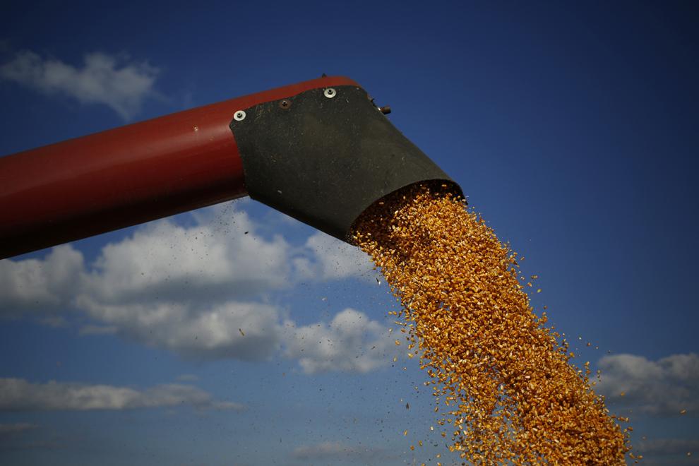 Boabe de porumb sunt depuse de o combină agricolă într-o semi-remorcă, în timpul secerişului, pe terenurile agricole arendate de Tucker Ferme, în Shelbyville, Kentucky, Statele Unite, marţi, 24 septembrie 2013.