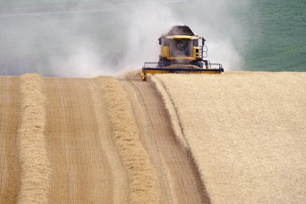Un agricultor francez recoltează un lan de grâu cu o combină, joi, 25 iulie 2013, în Civray-sur-Esves, centrul Franţei.
