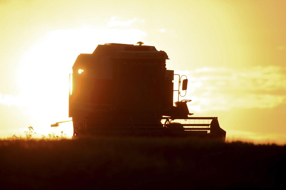 Un agricultor francez recoltează un lan de grâu cu o combină, sâmbătă, 10 august 2013, în Coulombiers, vestul Franţei.