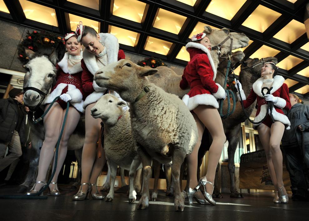 """Un măgar, două oi şi trei cămile pozează cu un grup de tinere din formaţia Rockettes, înaintea repetiţiilor pentru spectacolul """" Living Nativity"""", în New York, marţi, 29 octombrie 2013."""